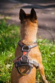 belgian sheepdog south africa belgian shepherd malinois dog harness flame