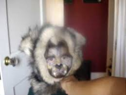 halloween werewolf costume and makeup for a 3 year old boy youtube