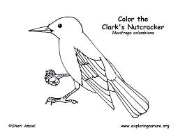clark u0027s nutcracker coloring