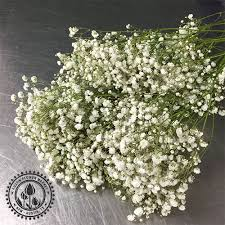 baby s breath flowers baby s breath flower market