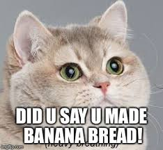 Cat In Bread Meme - heavy breathing cat meme imgflip