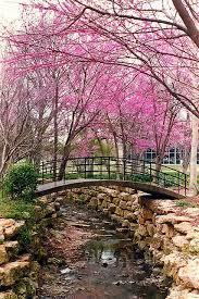 Ft Worth Botanical Gardens Weddings by 86 Best Fort Worth Wedding Venues Dfw Wedding Chapels U0026 Halls