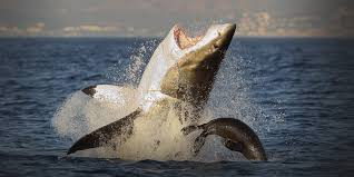 72 dangerous animals australia national geographic