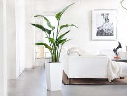living room plants juten kussenhoesbest 10 living room plants