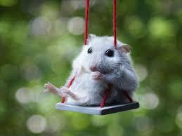 Weeeeeeeeeee 70 Best Myszka Images On Pinterest Animals Adorable Animals And