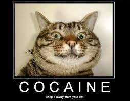Inspirational Funny Memes - 25 inspirational cat motivators smosh