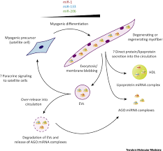 biomarker potential of extracellular mirnas in duchenne muscular