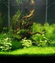 Aquascape Aquarium Designs Iadc A Few Great And Some Ordinary Nano Scapes Aquarium