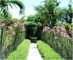 backyards gorgeous outdoor tropical plants for small garden