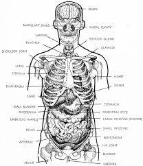 human female anatomy diagram human anatomy chart