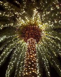 10 best christmas u0026 outdoor lights holiday palm trees warm winter