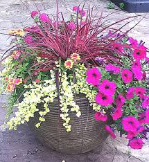 plants for containers johntheplantman s stories musings and