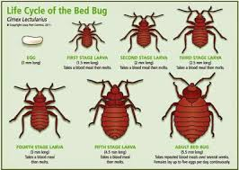 What Kills Bed Bugs And Their Eggs Bed Bug Bites Get Rid Of Bed Bugs Pictures Treatment Bed