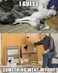 Dog Owner Meme - funny dog owner meme pics bajiroo com