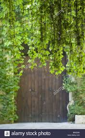 wood gate climbing plants detail series stock photos u0026 wood gate