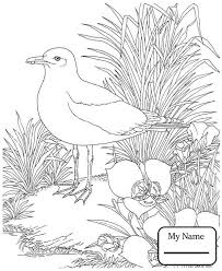 california gull birds coloring pages gilboardss com