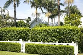 Privacy Garden Ideas Landscaping Ideas Privacy Hedge Gardening Privacy Hedges Gardening
