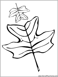 tulip tree coloring page kids drawing and coloring pages marisa