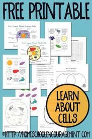 plants and animals cells printable science worksheets for 5th