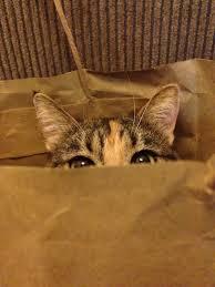 cat http status codes iridakos