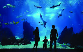 aquarium halloween resorts world sentosa singapore u2013 why not asia
