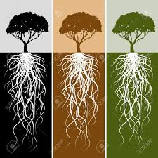 tree root stock photos pictures royalty free tree root images