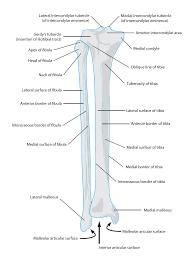 Human Anatomy Skeleton Diagram Human Anatomy Skeleton Diagram Human Anatomy Charts