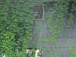 Stainless Steel Cable Trellis Architectural Mesh Durable And Versatile