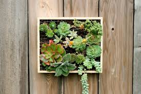 make your own wall mounted succulent garden