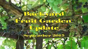 organic backyard fruit garden update grapes raspberries pears