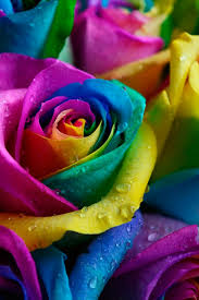 Blue Roses For Sale Rainbow Rose For Sale Tie Dye Rainbow Roses Delivery