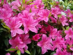 crafty ideas pink garden flowers innovative flower gardening design