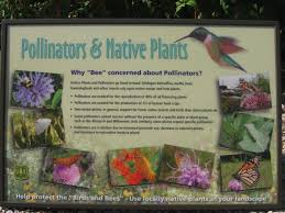 plants for native bees color interpretive signs for plants google search planting for