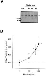 enhanced release of secreted form of alzheimer u0027s amyloid precursor