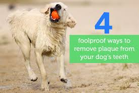 4 foolproof ways to remove plaque from your dog u0027s teeth oxyfresh