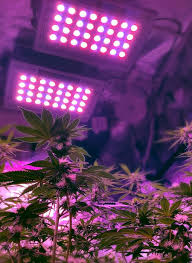 best light to grow pot 74 best led grow light for marijuana growing images on pinterest
