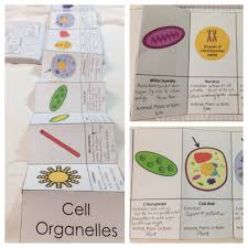 interactive cell diagram diagram images wiring diagram