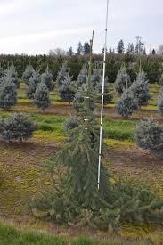 dsc 0764 premier trees