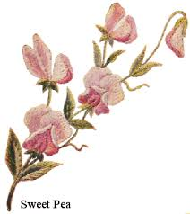 Sweet Pea Images Flower - how to embroider the sweet pea