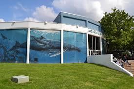 Wall Aquarium by Aquarium Of Niagara