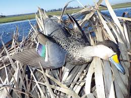 Duck Blind Accessories Are Argentina Duck Hunting Trips The Ultimate Slice Of Heaven