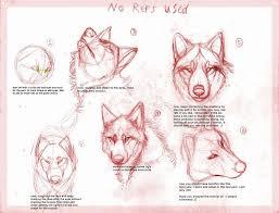 Tutorials By A 254 Best Animal Anatomy U0026 Tutorials Images On Pinterest Drawing
