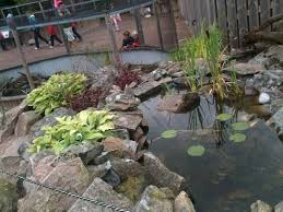 110725 european pond turtle enclosure zoochat