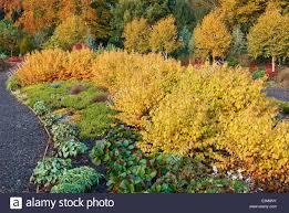 the winter garden in autumn bressingham gardens norfolk uk