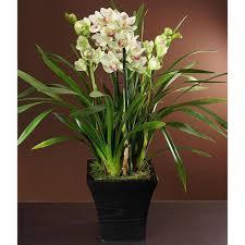 cymbidium orchid best 25 cymbidium orchids ideas on pink orchids