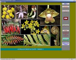 Tropical Plants Pictures - australian tropical plants