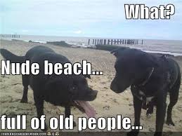 Nude Beach Meme - what nude beach full of old people i has a hotdog dog