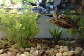 decorating ideas for turtle tank how to on a budget youtube