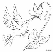 bird with flower u2013 coloring page pitara kids network