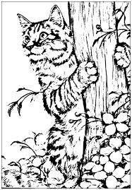 garden animals colouring pages free coloring pages